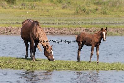 Gidget & Foal