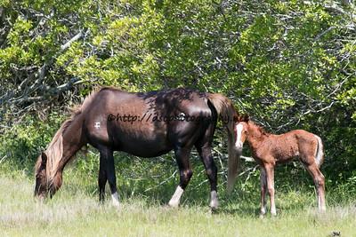 Gidget's 2015 Foal