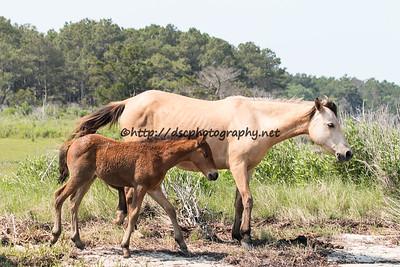 Kachina & Foal