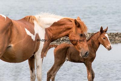 Lady Hook & Foal