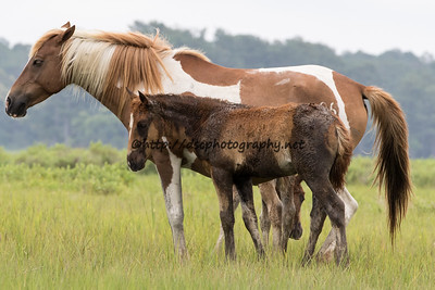 Lyra's Vega's Foal with Butterfly Kisses