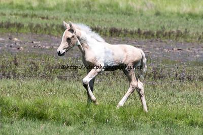 Shashay Lady's 2015 Foal