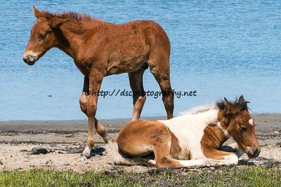 Shy Anne/Half N Half and Skylark's 2015 Foals