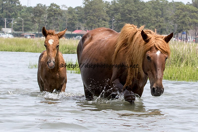 Surf Queen & Filly