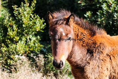 Unforgettable's Foal