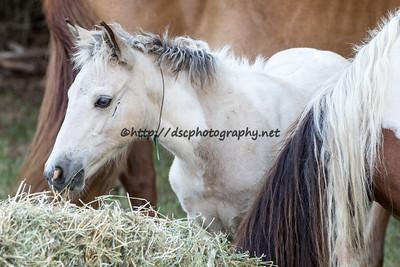 Ella's 2015 Foal