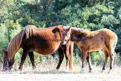 Unforgettable & Foal