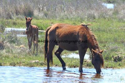 Elusive Star's 2015 Foal