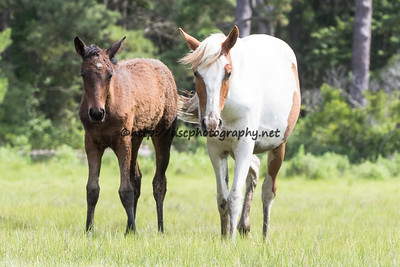Leah's Bayside Angel's Filly & Thunderstorm