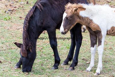 Raven & Firestar's Foal