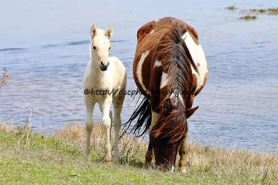 Baybe's 2015 Foal