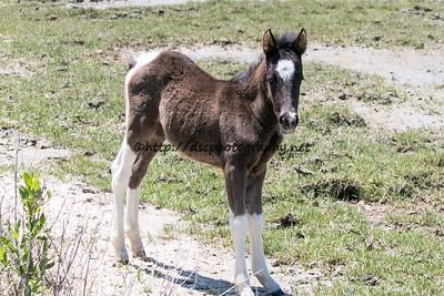 Destiny's 2015 Foal