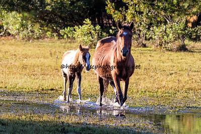 Firestar and foal