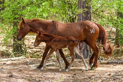 Suzy's Sweetheart & 2015 Foal