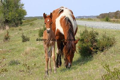 Sweetheart & 2015 Foal