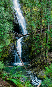 05 Mar 15.  Since one could imply that the last two mailings were of creative type images, all of course depending on your perspective, I thought I'd go with a very straight image for today. The Olympic Peninsula has a rather large grouping of majestic waterfalls, 26 to be exact, and that excludes the literally hundreds of smaller ones to be found in the same location but not significant in the eyes of the tourist industry, meaning the State. We set out on Tuesday to take in 3 of them, one which required a 1.6 mile round trip hike which proved to be somewhat of a challenge for both of us, and two others to which we simply drove, over some often less than wonderful roadway, got out of the car, and observed from a bridge. I'll write about all of the waterfalls one at a time as we check them off the brochure, titled A Magical Misty Tour, listing them. The first waterfall we visited was the one requiring the 1.6 mile trek with a 200 foot rise in elevation although walking it we would have bet it was more. This is named Murhut Falls. It is a two tiered fall that feeds the Duckabush River and while it is not obvious in the photo, it drops roughly 130 feet. To say that it is worth the trek would be one of the understatements of the year. The location was in very dense shade while we were visiting, so the photos all came out on the bluish side, but that was easily correctable with the RAW capture mode. If you ever get over on this side and drive along the west bank of Hood Canal, this is a must see in my opinion.  The RAW capture was adjusted in Camera Raw to correct for the bluish cast, then given a slight amount of texture enhancement for the water, and cropped to what you are seeing. Nikon D300s; 18 - 200; Aperture Priority;  ISO 500; 1/2 @ f /13