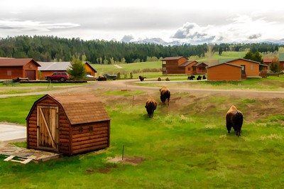 28 May 15.  Our last evening at the condo was spent with neighbors, one of whom is also a fellow BOD member, in fact, the chair. We had a most pleasant evening and returned with a mind set ready to drive home. As we left to go visit, this was the view with which we were presented. A small herd of bison having dinner in our side yard as well as in the yards of several of the neighbors. The evening was beginning and the cloud formation above the mountains was not unlike what we had been experiencing on a regular basis. Little did we know that a mere 8 hours later we would be treated to a half foot of snow with more to come. These guys were no longer in our side yard but in the safe area (a large private estate) behind us slowly making their way against the wind and snow. It being Theatrical Thursday I thought I would do something simple and just convert the shot to look more like a water color than anything else.  The base image was adjusted for max tonality, and then converted to the water color look. Nikon D300s; 18 - 200; Aperture Priority; ISO 200; 1/400 sec @ f /10.