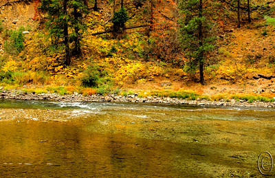 14 Oct 15	.  On each visit to Leavenworth we do our best to find fish in the Wenatchee River. Last week when we visited we were well rewarded and the Steelhead were hard at work in the extreme shallows of the river. Watching them I couldn't help but be amazed at their life cycle. Especially when one considers that they begin life in fresh water, live most of their lives in salt water, and return to fresh water to reproduce. Until you've seen what they have to traverse to get back to their birthplace, you don't really have an appreciation for it. Add to that the size of the hatchlings who have to make their way into the Pacific Ocean and survive there for 3 - 5 years before making their return and the whole thing seems simply impossible.With a life story such as theirs, there is no doubt that they are the fittest of the fittest. To my way of thinking, there is absolutely no way this could have occurred by chance. The thin brown lines in the bottom and right lower thirds are the spawning Steelhead. Note how shallow the water is where they are spawning, barely covering the fish.  The base image was adjusted for max tonality and then given a small amount of micro contrast enhancement. Nikon D300s; 18 - 200; Aperture Priority;  ISO 400; 1/80 sec @ f / 8.