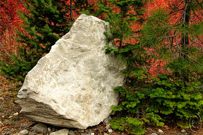 "12 Oct 15.  Walking along the road side of one of the spots where I regularly stop to shoot color on our fall trips to Leavenworth I noticed this large white rock. The rock its self called out to pose for the camera, but before I took the shot I walked around the front side of it looking to see if there was a best angle to make the image and was immediately rewarded by this view. The composition reminded me of part of the Lutheran communion service with the words ""a foretaste of the feast to come"" in that the colors simply cried out Christmas with the red and green combination so there was my foretaste of the season to come upon us very soon. I have no idea what type of rock this is, but those of you with a geology background will I'm certain immediately recognize it. However, it was its size, shape, color, and position with respect to the evergreens and vine maples that caught my eye. The rock is a little over 4 feet in height and I'm guessing weighs in at roughly a ton. I think it would make a nice piece of yard landscape but one would need some heavy equipment to use it as such. Lacking same, I'll just enjoy it each year on our annual visit to the area.  The base image was adjusted for max tonality, given a small amount of micro contrast adjustment, and that was it. Nikon D300s; 18 - 200; Aperture Priority; ISO 400; 1 / 250 sec @ f / 8."