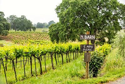 Amador Cellars vineyard in Plymouth, CA