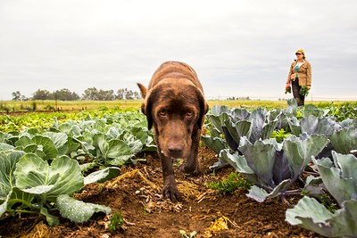 Farm dog Olive at Heavy Dirt Farm