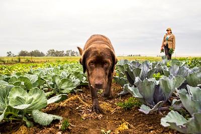 Farm dog Olive at Heavy Dirt Farm