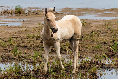 Baybe's Filly