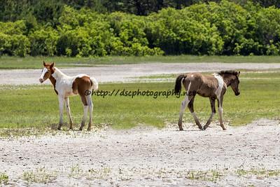 Gidget's & Destiny's Foals