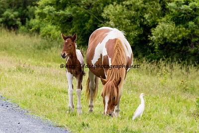 Dove & Filly