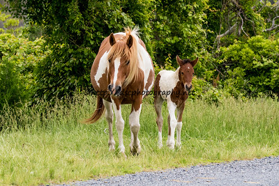 Dove and Filly