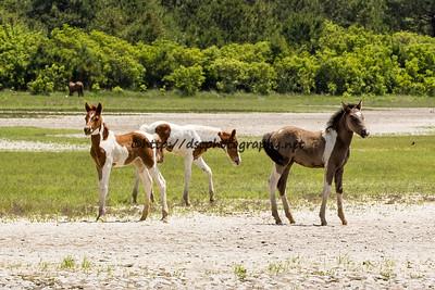 Duckie's, Gidget's and Destiny's Foals