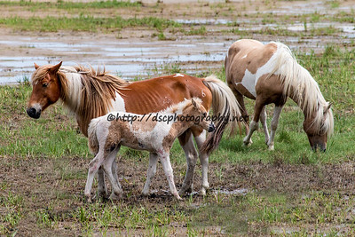 Prince, Rainbow Delight & their Filly