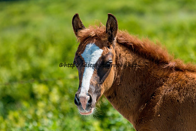 Unforgettable/Diamond's Filly