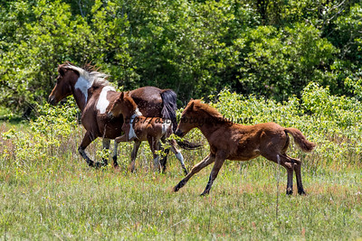 Carol's Little Freedom, her 2016 Colt & Wild Island Orchid's Filly