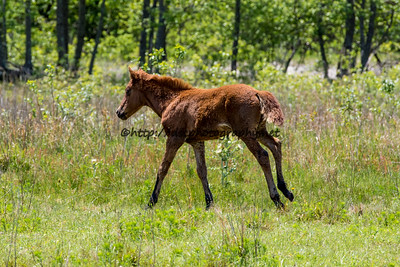 Wild Island Orchid's Filly