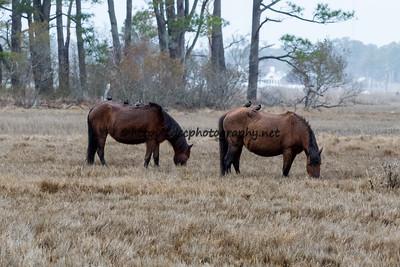 Pappy's Pony & Bay Girl