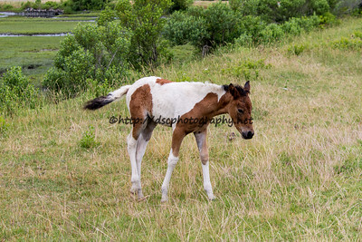 Skylark's Filly