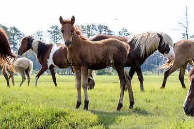 Suzy's Sweetheart's Filly