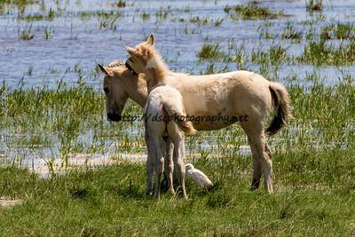 Baybe's & Rainbow Delight's Foals