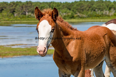 Kimmee-Sue's Filly