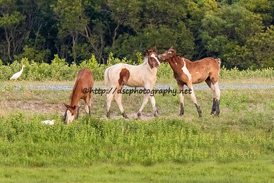 Kimmee-Sue's, Cinnamon Blaze's & CJ Samm'n's Foals