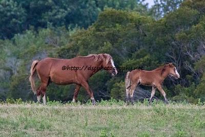 Ken & Kimmee-Sue's Foal