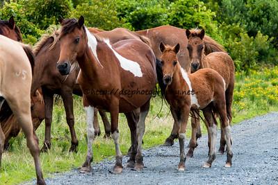 Carol's Little Freedom & Foal