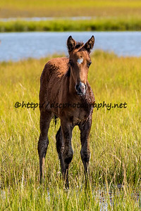 Galadriel's Filly