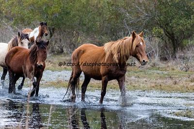 Surf Queen, Pappy's Pony, Alice's Sandcastle & White Saddle