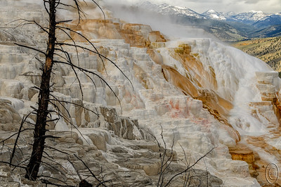 27 Jun 16.   This is a shot taken at Mammoth Hot Springs of the far eastern edge of the upper terrace from the boardwalk that takes you right to the edge of the spring. Since the boardwalk was constructed a number of trees have gotten in the way of the view and even had the nerve to die so that they make for a challenging photograph. In some ways the dead trees add to the overall scene but in other ways they just get in the way. How you view them in part impacts your photo. I find them both attractive and annoying depending on what exactly I'm trying to portray. When my goal is to just show the spring they are a real pain as you always have to shoot through them to some degree, but when I'm trying to showcase the entire area they add a lot to the overall composition. On the day I shot this frame it was generally overcast which you may discern from the clouds present in the top right of the frame, but the overcast lighting allowed for some of the more subtle colors to pop out. The trade off for the capture of the subtleties of color is that the scene overall isn't showing off all the bright whites and oranges that are present with the sunlight shining directly on the spring. I could of course make it all pop with a bit of editing, but then I would have needed to wait until Thursday as it would truly be a creative image. The way I'm sharing it is just how it looks on an overcast day and while I wouldn't want this to be my only capture of the spring, I think it goes well as a part of a collection of shots taken under all kinds of lighting. If you visit this part of the park and have the time, do try to see it under different lighting conditions. Sometimes it is hard to believe you are looking at the same thing.  This is pretty much a straight capture save for a slight bit of micro contrast enhancement added to give a little more depth to the ledges which was lost due to the flat lighting.  Nikon D300s; 18 - 200; Aperture Priority;  ISO 200; 1/640 sec @ f /10.