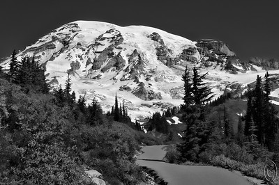 01 Mar 16.   Like a lot of our National Parks, Mt Rainier has a number of trails that are basically paved walks. Many of them are wheel chair accessible provided you have a powered wheel chair as they do tend to climb a fair amount in places. But they are very even, quite wide, and extremely well maintained. Not all of the trails are paved, in fact, the very best ones are just a swath in the landscape, dirt surrounded by nature, bringing you into immediate contact with the flora and fauna, but the paved ones are still very nice and for those who are not up to striking out into the wilderness, they amply serve their purpose. The shot for today gives a realistic view of how well these paved paths are maintained, so for any of you who have not visited due to concerns of access let this image reassure you that it is all available to you. This shot is taken from the Paradise side, but similar trails are available at the Sunrise side as well. If you haven't visited Mt Rainier, this is a spot that deserves to be on your bucket list!!  The base image was cropped for best composition, given a small amount of sharpening, and converted to B&W.  Nikon D300s; 18 - 200; Aperture Priority; ISO 200; 1/1000 sec @ f / 9.