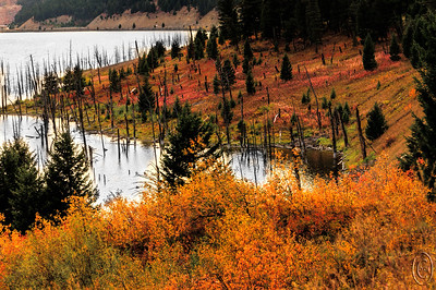 09 Nov 16.   As we were approaching our final destination of the condo on day two, we paused for about an hour shooting the color surrounding Earthquake Lake. The yellows were at peak and the reds were somewhat past prime. The stormy light was casting a very warm glow on everything as you can tell from today's submission. As you drive along the road, you can see it in the upper left corner, you hug the lake for about two miles. There are many pull outs provided for viewing the surrounds and one is frequently blessed with a group of Big Horn Sheep walking along the highway. On this trip we failed to see any of them on the highway, but we did see plenty in the park which normally we  don't as shown with yesterday's shot. But sheep or no sheep, the colors made up for it all. This shot gives you a pretty good idea of what we experienced throughout the trip.  This is straight from the camera.  Nikon D300s; 18 - 200; Aperture Priority; ISO 400; 1/250 sec @ f /10