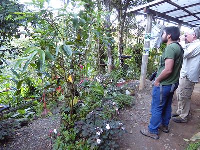 17-029 Anchicaya - Dolmetsch Arboretum 22 Jan Susan