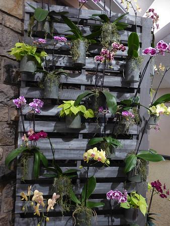 17-032 Orchids Longwood 3 Feb Susan